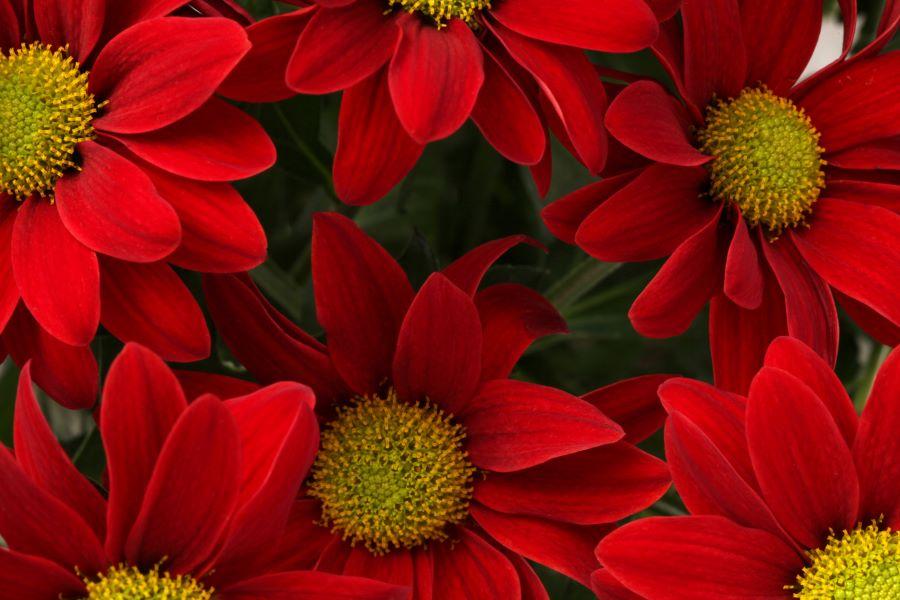 Scopri la gioia di spedire fiori domicilio